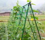 Шпалера для огурцов,  гороха и др. бобовых 1.8х1.8м