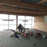 Кинологический центр дрессировки собак
