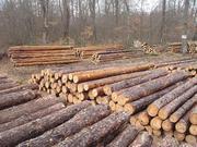 Лес Кругляк деловой хвоя тонкий