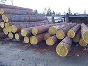 Отборный лес больших диаметров свежеспиленный