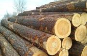 Лес кругляк на распиловку от 18 см