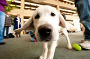 Mirdog - Кинологический центр дрессировки собак. Москва