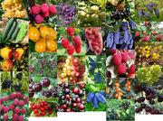 Саженцы плодовых деревьев и плодовых кустарников