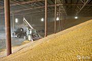 ООО ТД ФРЕГАТ оптовая торговля зерном