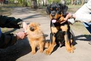 дрессировка собак всех пород
